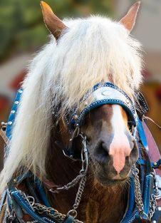 Free Horse, Bridle, Horse Harness, Horse Tack Royalty Free Stock Photo - 100778905