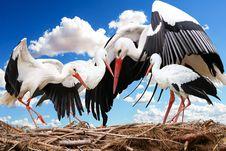 Free Stork, White Stork, Bird, Beak Royalty Free Stock Photos - 100779108