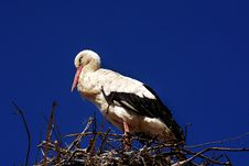 Free Bird, White Stork, Stork, Sky Royalty Free Stock Photography - 100779147