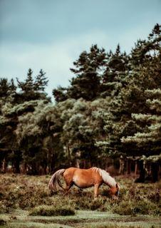 Free Horse, Tree, Horse Like Mammal, Pasture Stock Images - 100779344