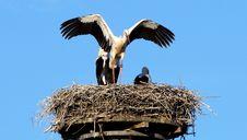 Free Bird, Stork, White Stork, Sky Royalty Free Stock Photography - 100784137