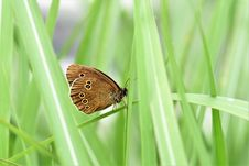 Free Butterfly, Insect, Moths And Butterflies, Brush Footed Butterfly Royalty Free Stock Photos - 100784398