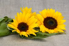 Free Flower, Sunflower, Yellow, Sunflower Seed Royalty Free Stock Photography - 100784467