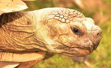 Free Tortoise, Turtle, Reptile, Terrestrial Animal Stock Photo - 100784610