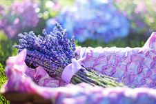 Free Blue, Flower, Purple, Lilac Royalty Free Stock Photography - 100784647
