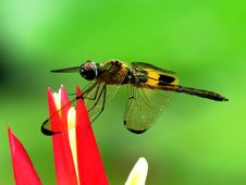 Free Insect, Invertebrate, Dragonfly, Macro Photography Stock Photo - 100789090
