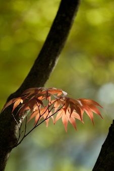 Free Leaf, Deciduous, Branch, Close Up Stock Photography - 100791982