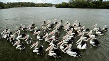 Free Bird, Pelican, Seabird, Vertebrate Royalty Free Stock Photos - 100792548