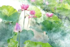 Free Flower, Lotus, Sacred Lotus, Plant Royalty Free Stock Images - 100792699