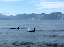 Free Marine Mammal, Whales Dolphins And Porpoises, Ocean, Water Royalty Free Stock Image - 100792796