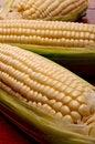 Free Close Up Of Three Cobs On Corn Stock Image - 10085281