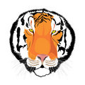 Free Tiger Royalty Free Stock Photography - 10087067