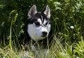 Free Dog Stock Photo - 10088180
