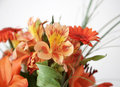 Free Orange Flowers Royalty Free Stock Photo - 10088445