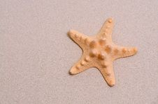 Free Starfish Stock Photos - 10081873
