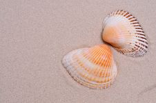 Free Sea Shell Stock Images - 10081874