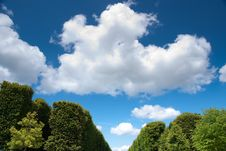 Free Tree Against Blue Sky Stock Photos - 10082073