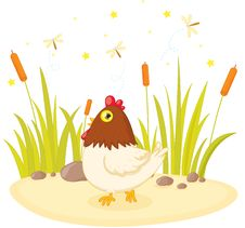 Free Hen Stock Photos - 10082953