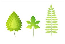Free Vector Green Leaves Royalty Free Stock Photography - 10083897