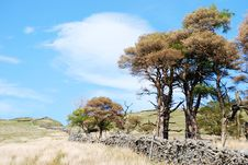Free Yorkshire Dales Landscape Royalty Free Stock Photos - 10084538