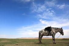 Free Horse. Stock Photos - 10084613