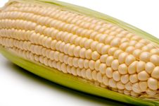 Close Up Of A Cob Of Corn Royalty Free Stock Photo