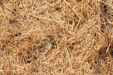Free Oblique Wheat Stock Image - 10085651