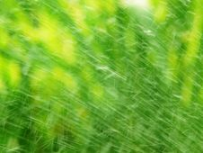 Free Water Drops Over Green Grass Stock Photo - 10085880