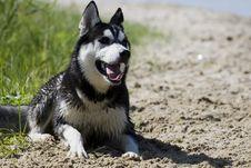 Free Dog Stock Image - 10086951