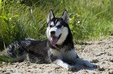 Free Dog Royalty Free Stock Image - 10087456