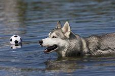 Free Dog Stock Images - 10088044