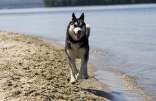 Free Dog Stock Photography - 10088102