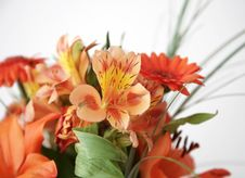 Free Orange Flowers Royalty Free Stock Photo - 10088445
