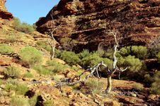 Free Kings Canyon, Australia Stock Photography - 10088862