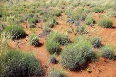 Free Spinifex In Red Centre, Australia Stock Photos - 10089103