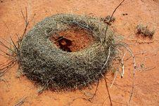 Free Ant Hill In Australian Desert Stock Photo - 10089180