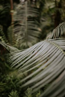 Free Tropical Leaves Royalty Free Stock Photo - 100821735