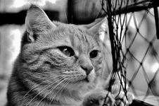 Free Cat, Whiskers, Black And White, Black Royalty Free Stock Photos - 100829318
