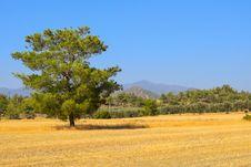 Free Grassland, Ecosystem, Savanna, Field Royalty Free Stock Photo - 100832335