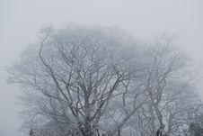 Free Branch, Tree, Fog, Sky Royalty Free Stock Photos - 100832558