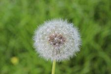 Free Flower, Dandelion, Flora, Plant Royalty Free Stock Photography - 100832677