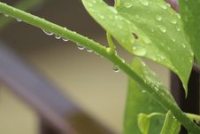 Free Water, Leaf, Dew, Moisture Stock Photos - 100836333