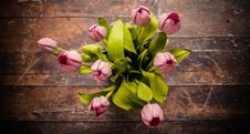 Free Flower, Plant, Flowering Plant, Yellow Royalty Free Stock Photography - 100843347