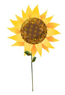 Free Sunflower Stock Photography - 10092292