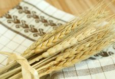 Free Gold Wheat Harvest Stock Photography - 10093652