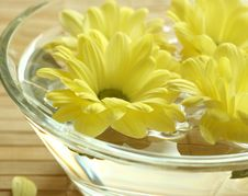 Free Yellow Flowers Floating In Bowl. Stock Image - 10094131