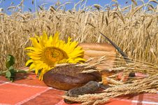 Free Bread And Wheat Stalks. Stock Image - 10094401