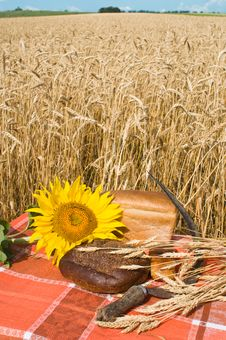 Free Bread And Wheat Stalks. Royalty Free Stock Photos - 10094438