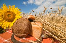 Free Bread And Wheat Stalks. Stock Photography - 10094492