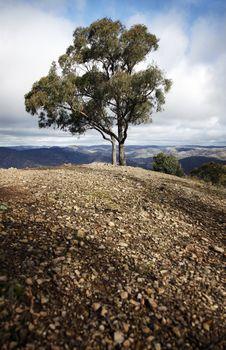 Free Single Tree, Blue Mountains, Austalia Stock Photos - 10094613